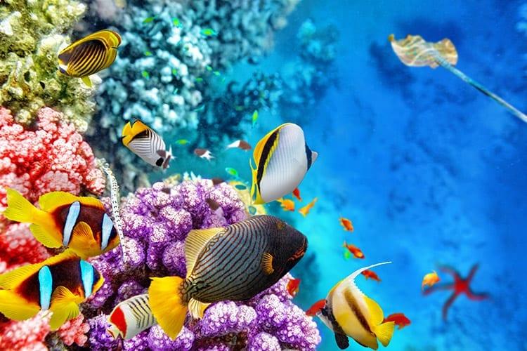 Duiken, Hurghada