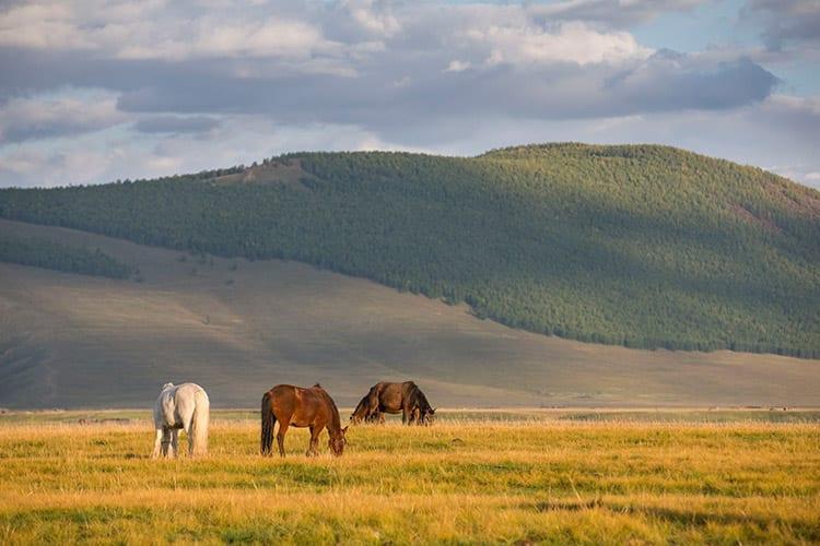 Hustain Nuruu National Park, Mongolië