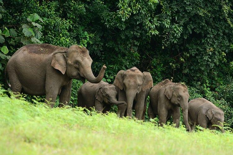 Olifanten in het Khao Yai National Park