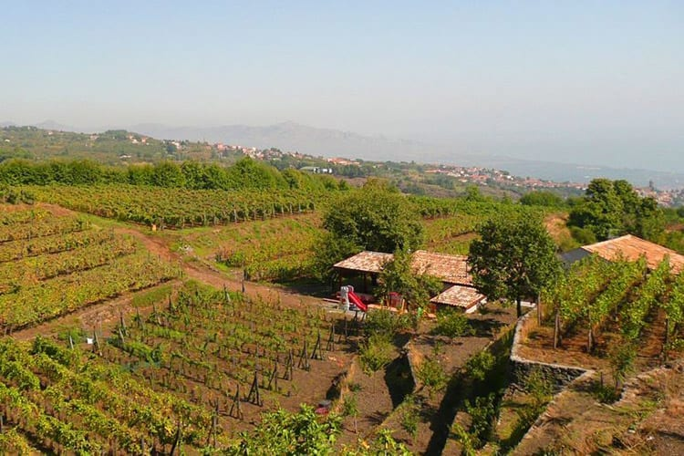 Agriturismo Le Case Del Merlo, Sicilië